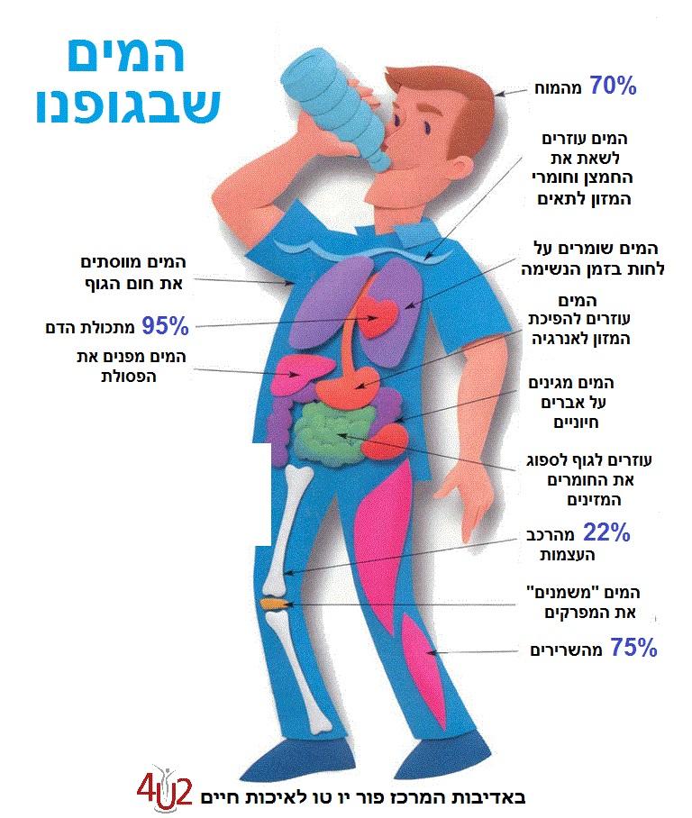 חשיבות המים לבריאות האדם